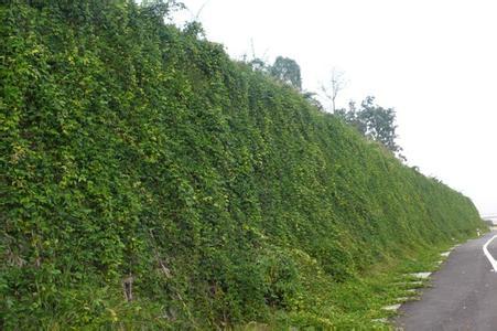 生态袋建造柔性挡土墙工艺