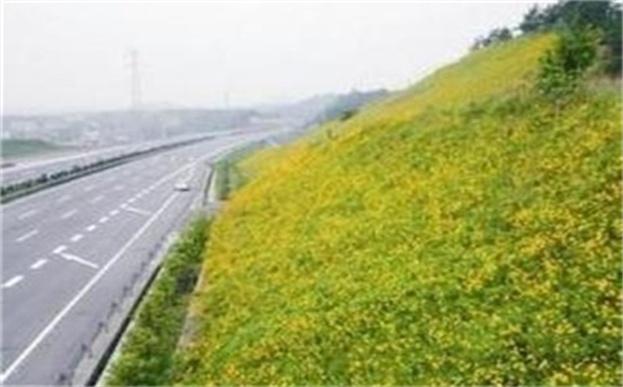 高速公路边坡绿化植物纤维毯