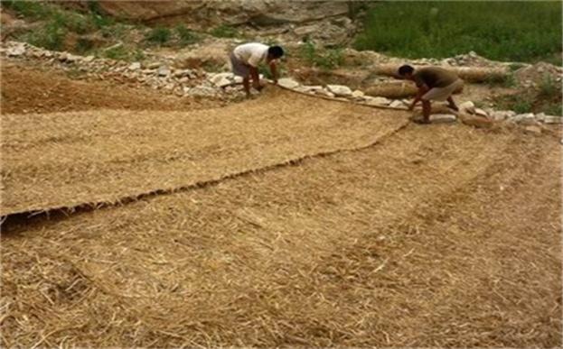 植生毯是沙漠变绿洲的营养剂