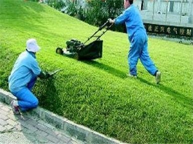 植物纤维毯绿化小区