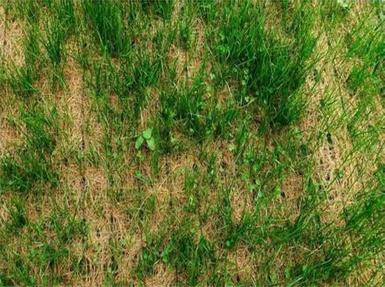 正确的环保草毯应用方法