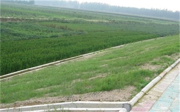 植被毯护坡原理