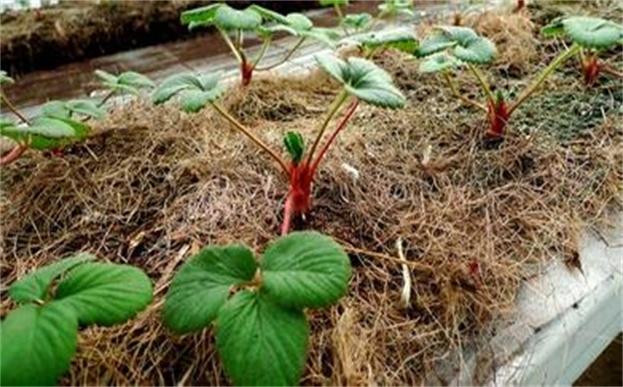 环保草毯—有机生态无土栽培的理想基质