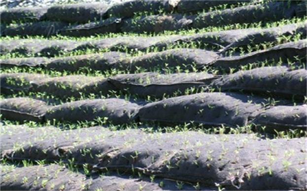 生态袋上面播种绿化方法