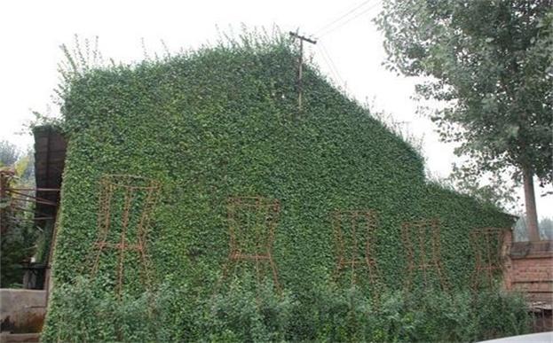 墙上能植草种花,是真的吗?—环保草毯技术
