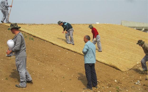 环保草毯施工之撒播草籽与肥料