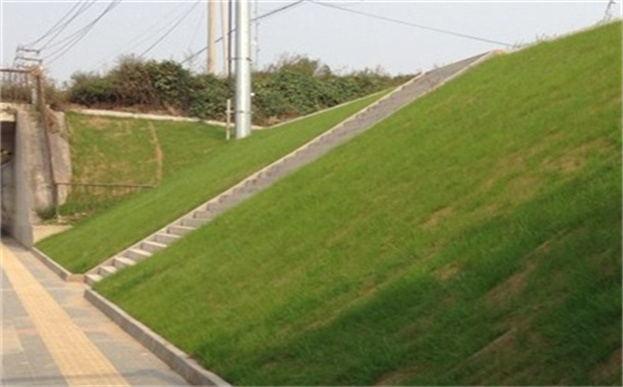 植生毯是一种环保型边坡绿化护坡材料